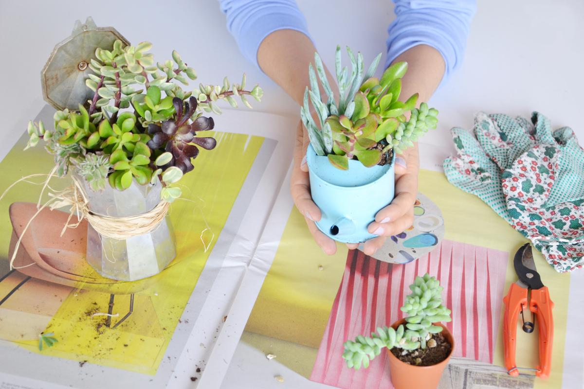 Riciclo creativo come trasformare vecchi contenitori in - Vasi con piante grasse ...