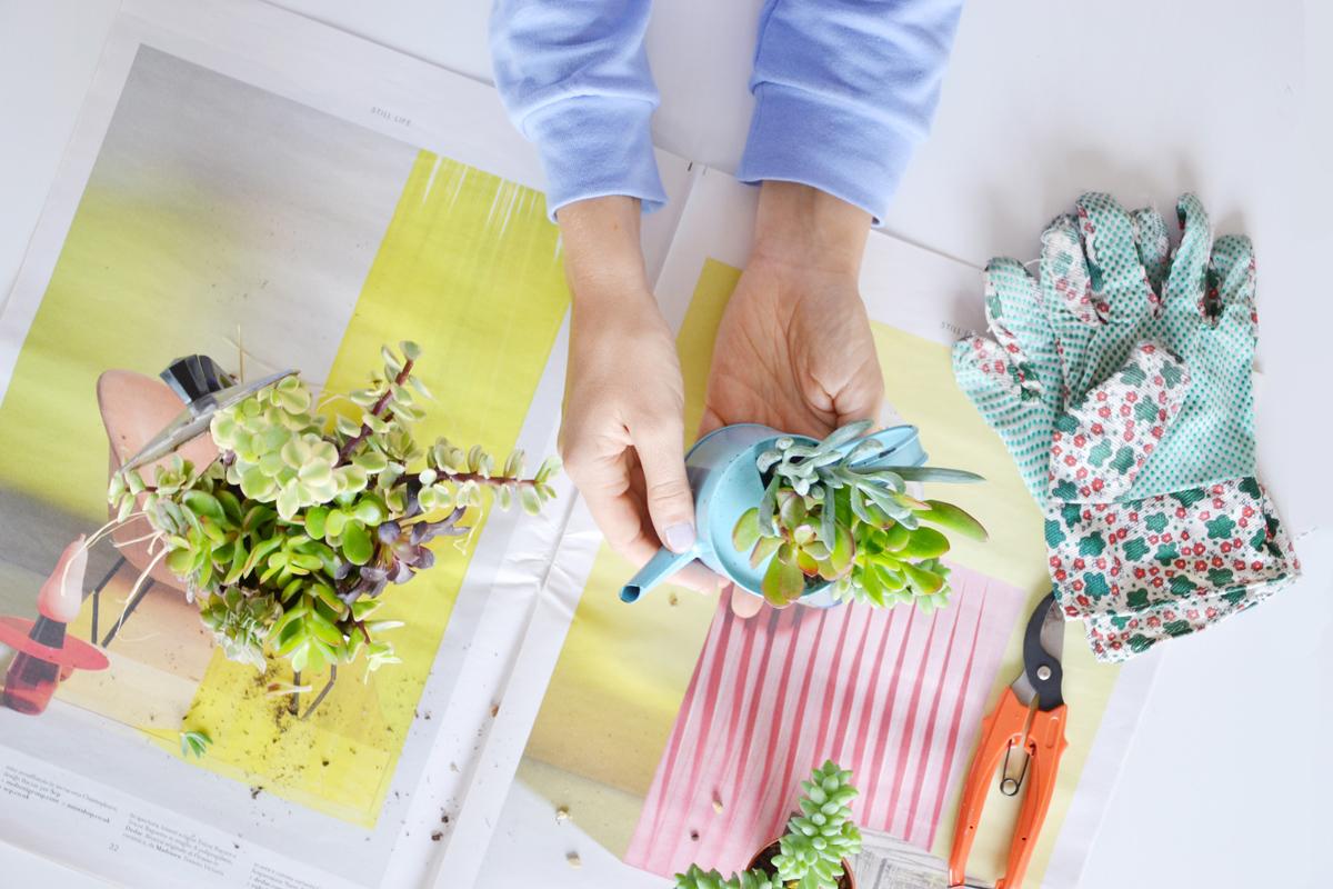 piante-grasse-vasi-fai-da-te-6