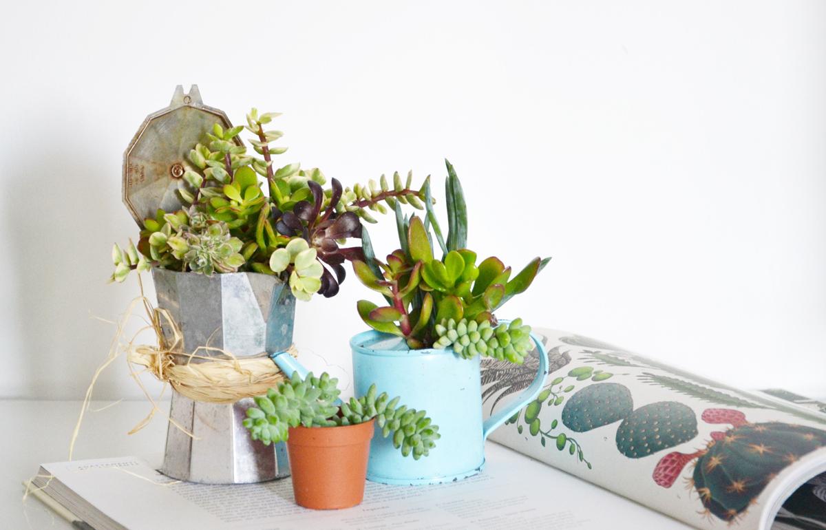 Vasi piante grasse design idee per interni e mobili - Vasi con piante grasse ...