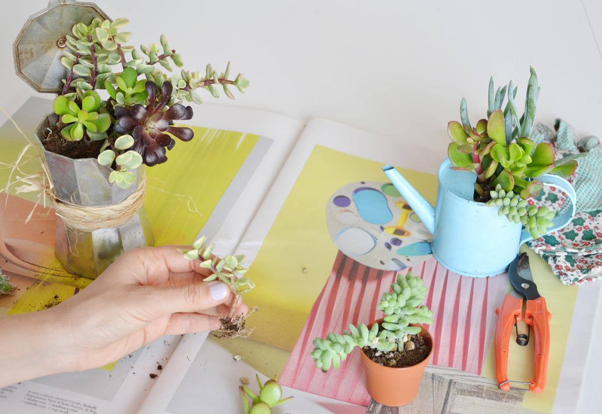 piante-grasse-vasi-fai-da-te