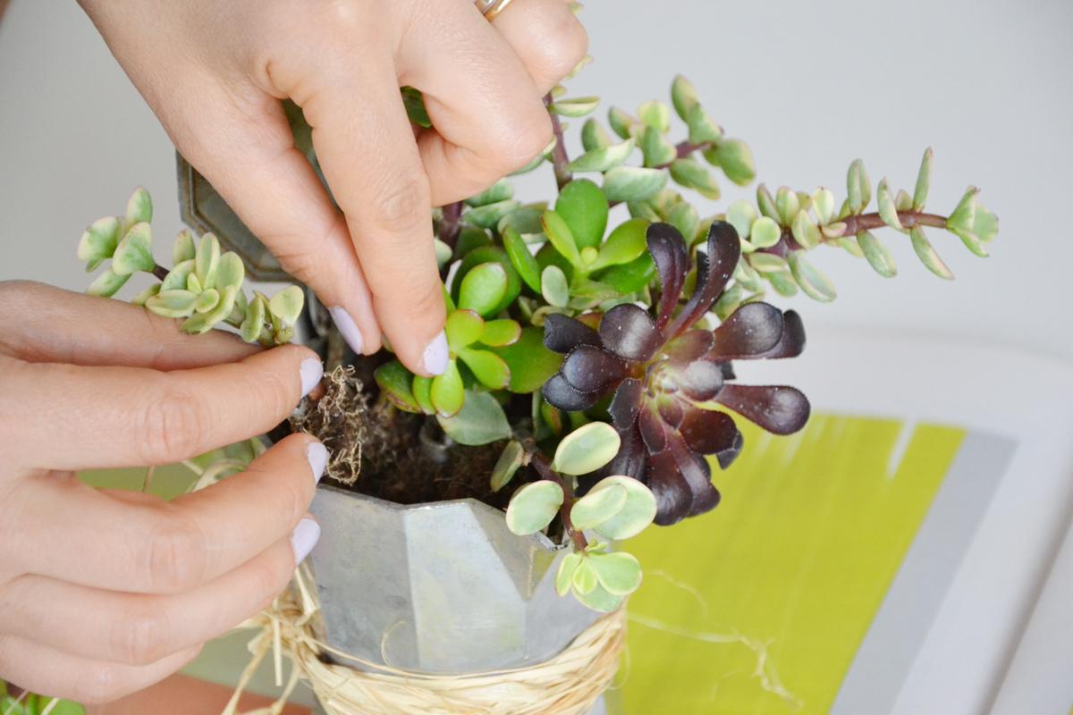 riciclo-caffettiera-piante