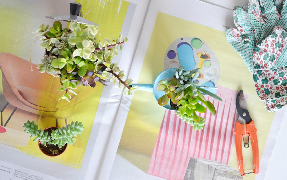 vaso-piante-grasse-fai-da-te