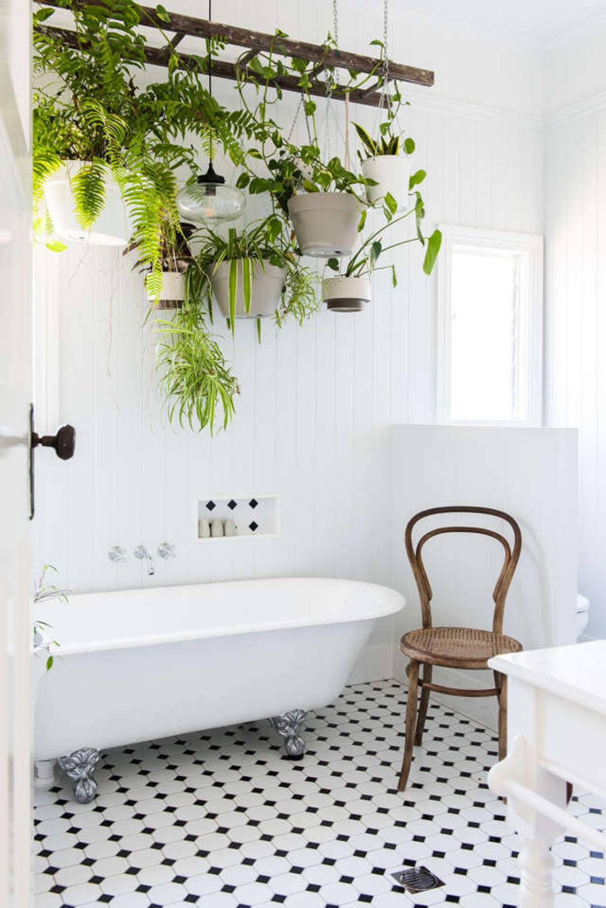 Piante Da Appartamento Per Bagno.6 Consigli Per Scegliere Le Piante Giuste Da Mettere In Bagno