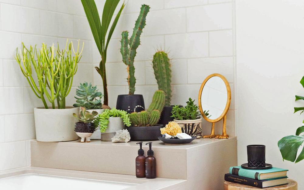 6 consigli per scegliere le piante giuste da mettere in bagno - Piante in bagno ...